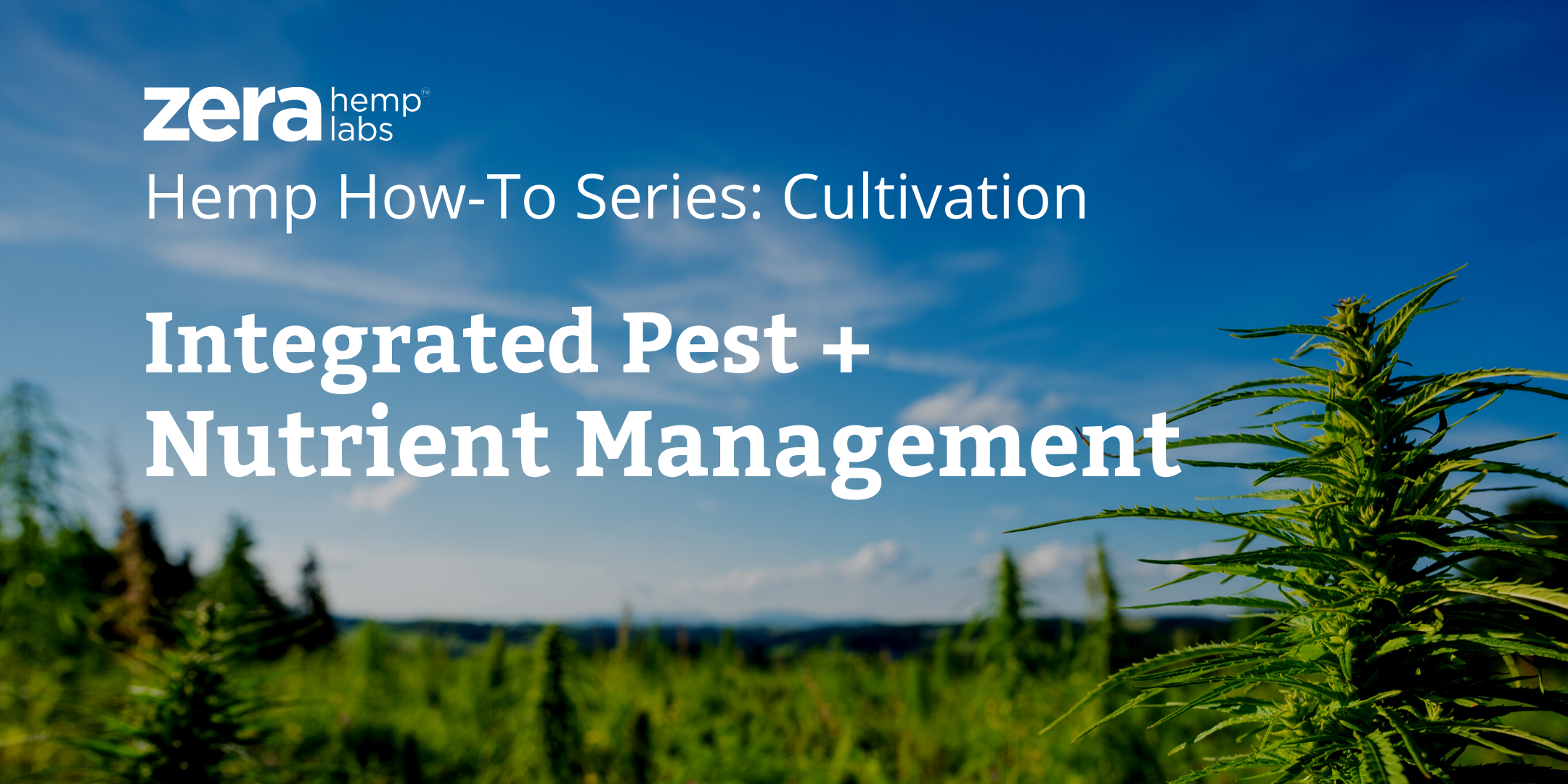 Hemp How-To: Integrated Nutrient and Pest Management