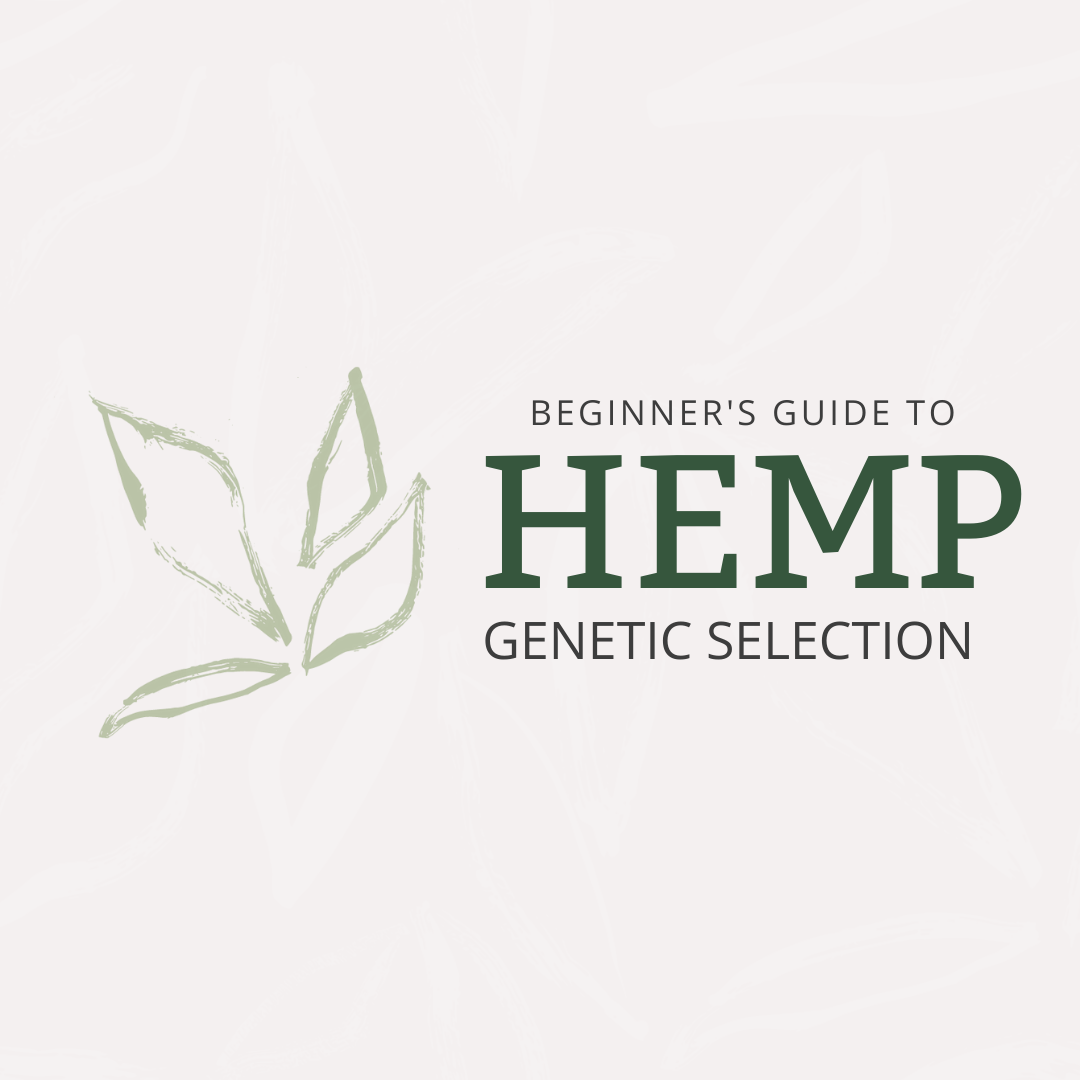 Beginner's Guide to Hemp Genetic Selection